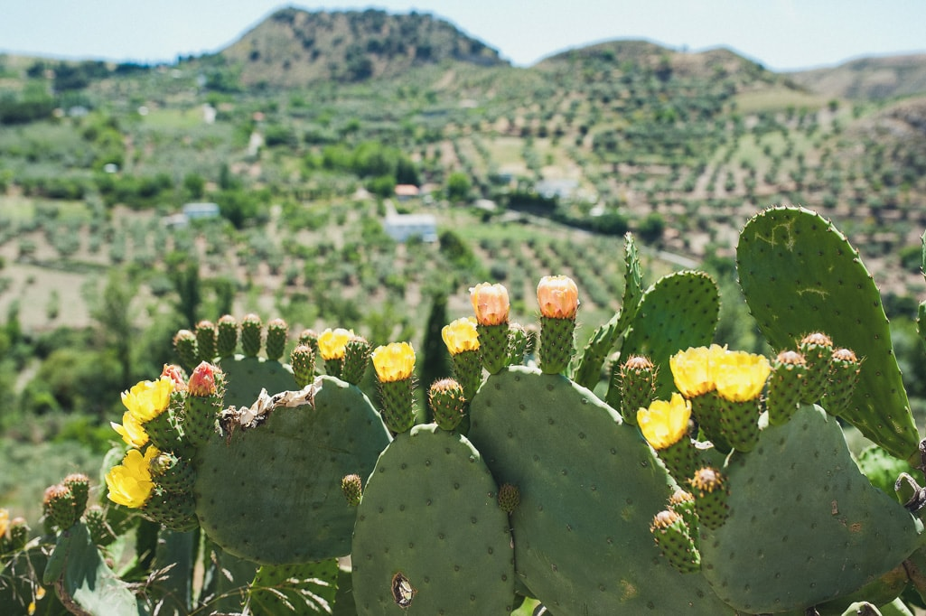 Andalusien2014_15